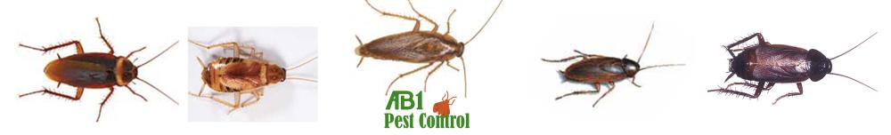 Cockroaches in Kogarah