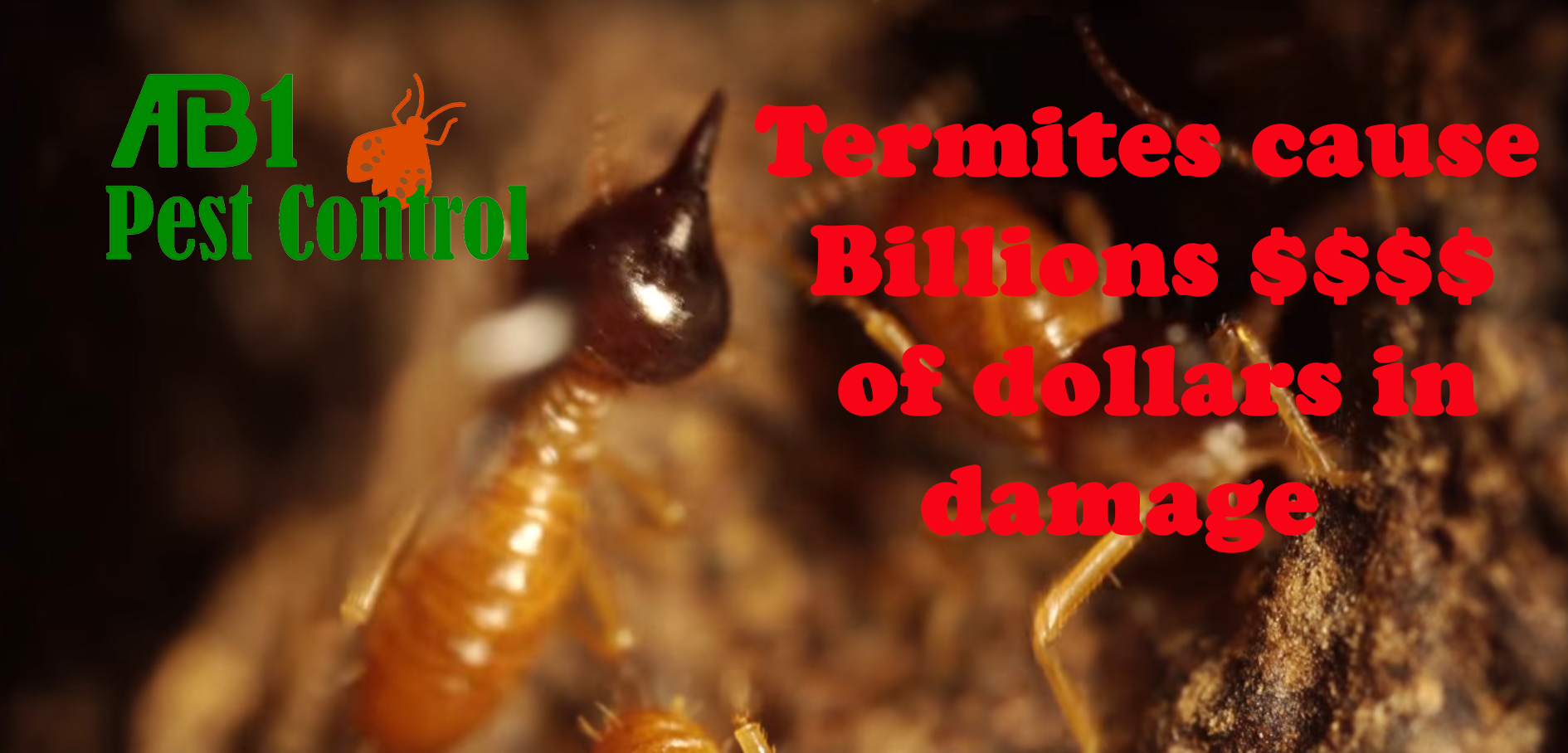 Damage cost from termites