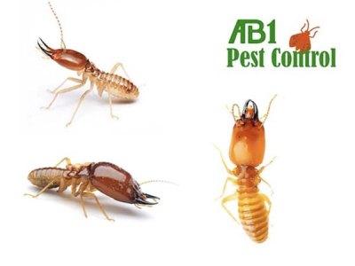 Termites In St George