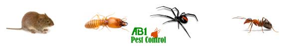 Ant spider mice termite