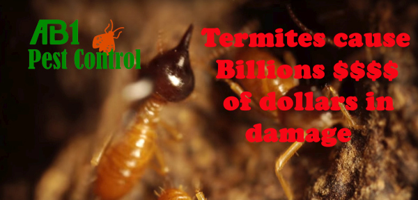 Cost of damage by termites