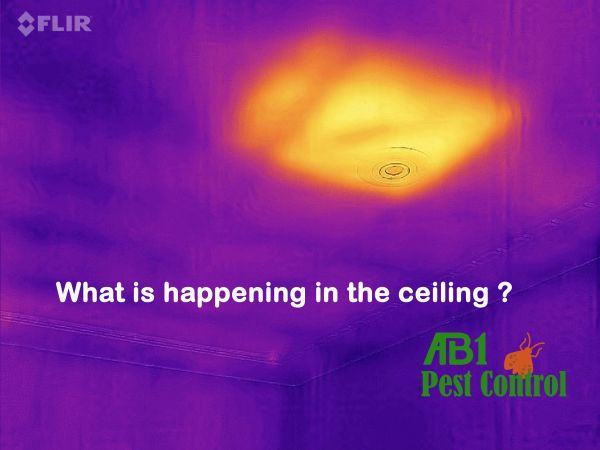 Pest Control St George Thermal Inslection