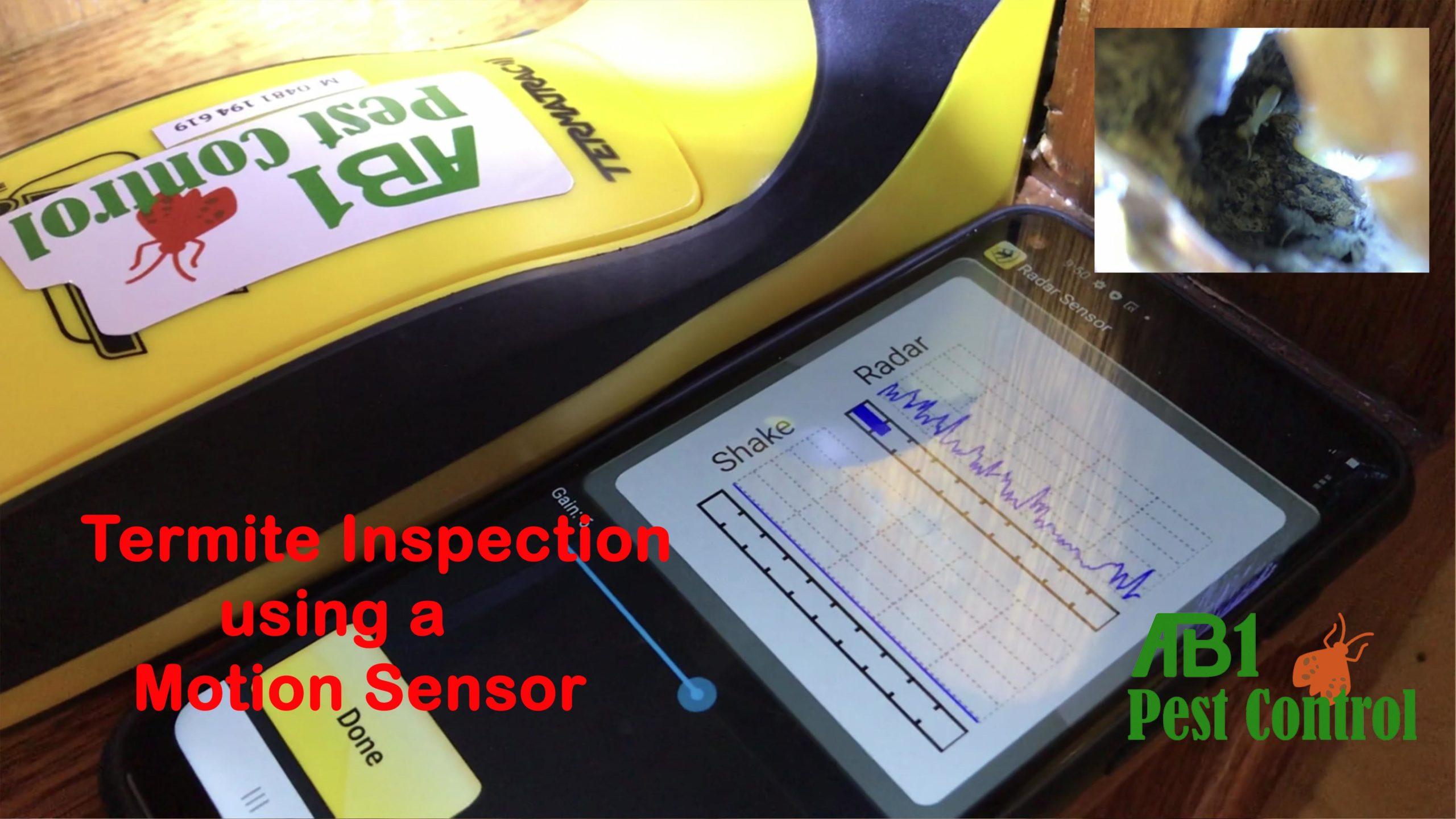 Termite Inspection Georges River