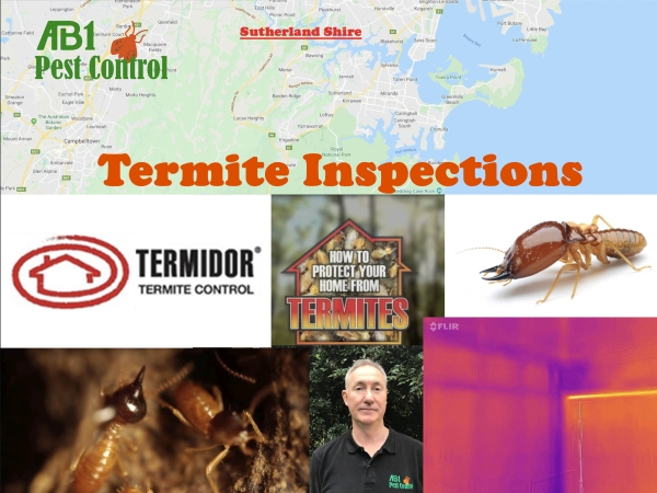 Termite Inspection Sutherland Shire