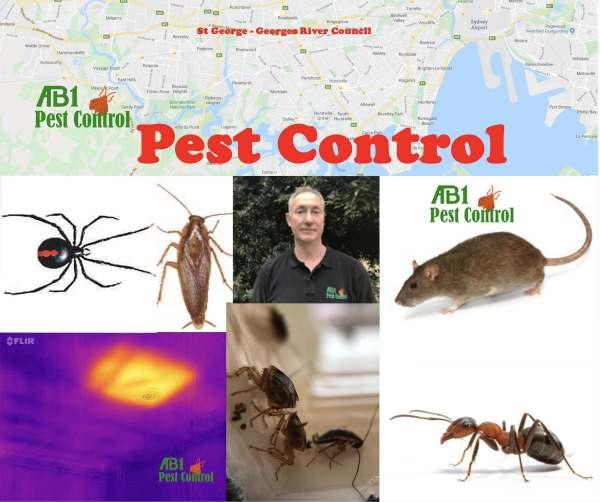 Pest Control Lugarno
