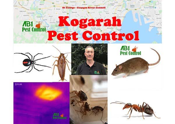 Welcome To Pest Control Kogarah